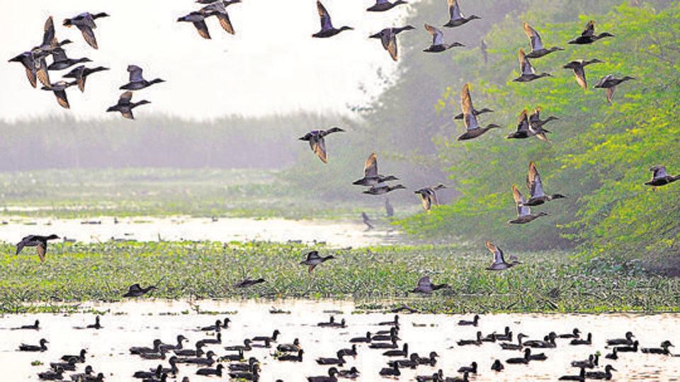 Annual summer bird count held in Delhi, 200 species counted