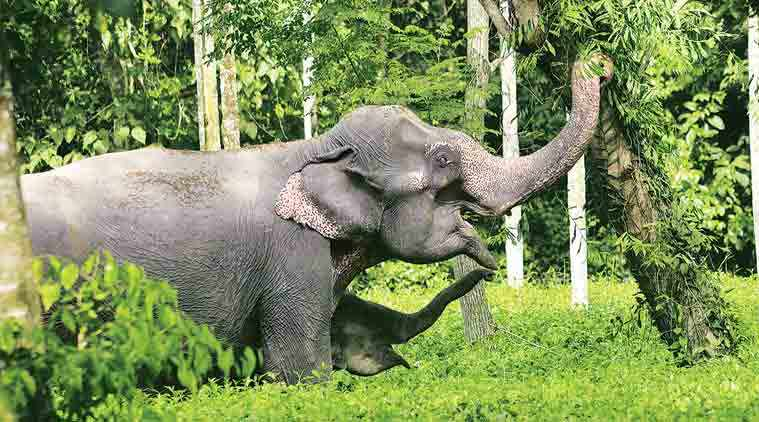 Elephants from Assam to endure a 70-hour journey to participate in religious function in Gujarat
