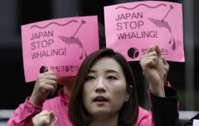 Explained: What's behind Japan's support of whaling?