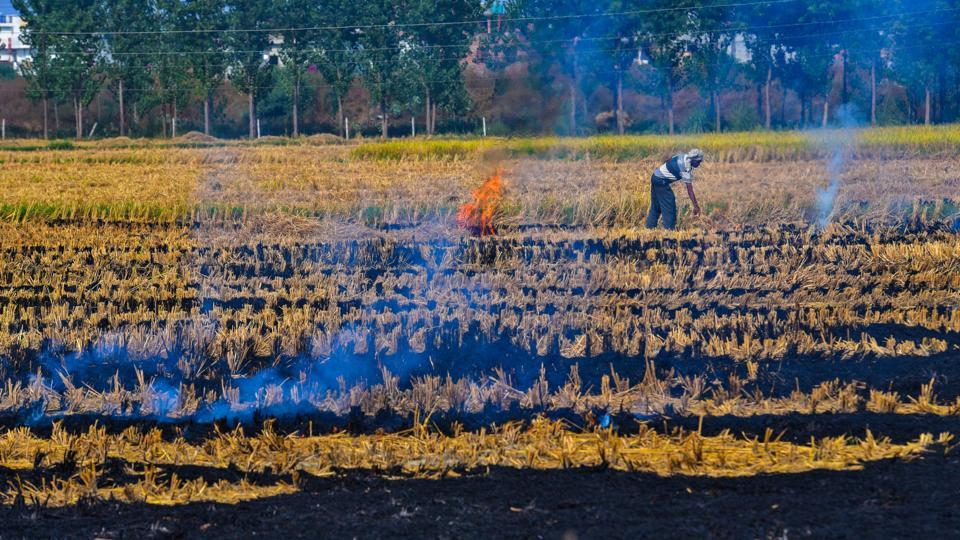 Increase in wheat stubble burning incidents in Haryana