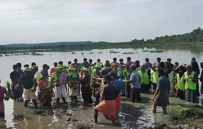 Efforts to revive kaipad paddy fields begin