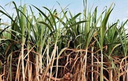 Sugar mills back move to build 4 million tonne buffer