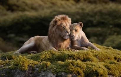 The Lion King director Jon Favreau reveals the only real shot in the entire film, leaves fans stunned. See it here