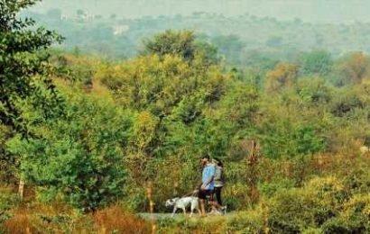 Aravalli Park revival in Gurugram on track, say birders
