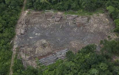 Brazil's far-right leader slashes Amazon protections, and forest begins to fall