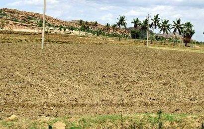 Karnataka's rice bowl stares at crisis as water level in TB dam sinks