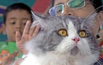Cat show evokes good response