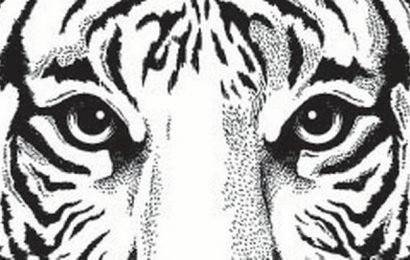 Majestic strides in the wild: on tigers in Tamil Nadu