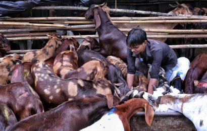 Mumbai: Bar coded slips solve goat theft from Deonar abattoir