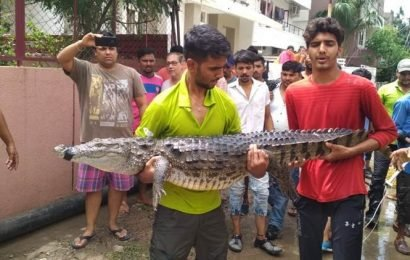 Vadodara floods: Crocodile in the city