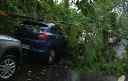 Tree comes crashing down in Nahur