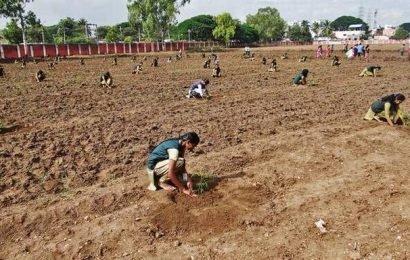 TNAU launches afforestation drive