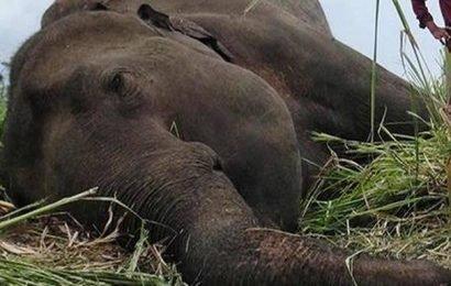 Seven elephants found dead in Sri Lanka