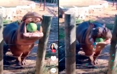 Couple use hippo for gender reveal, people call it the 'worst.' Mother-to-be replies
