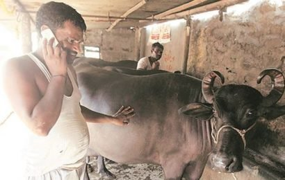 Madhya Pradesh govt to allow people to adopt cows