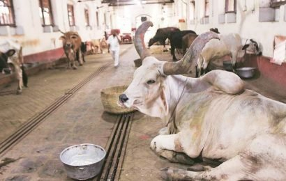 Surat: Four SMC officials attacked for impounding stray cattle