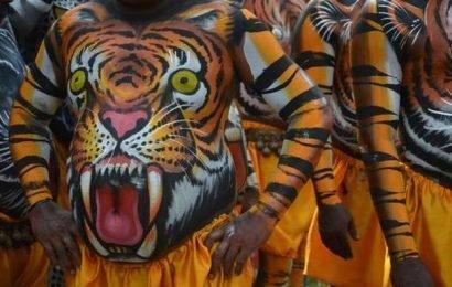 Watch | Pulikkali: Kerala's 'play of the tigers'