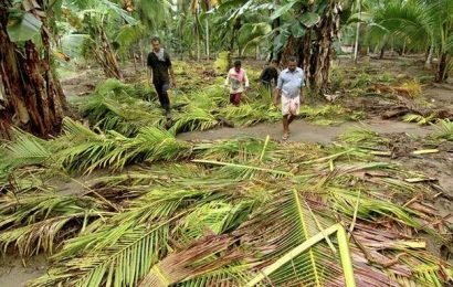 Munderi seed farm suffered extensive damage in floods
