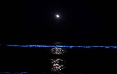 Watch | What caused the blue glow on Chennai beaches