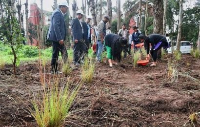 Native flora being introduced on Nilgiri Library grounds