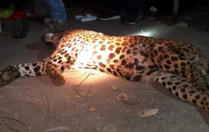 Two 'maneater' leopards killed in Uttarakhand within one week