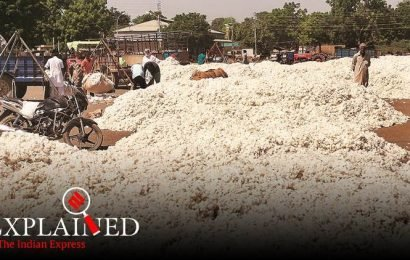 Fall in raw cotton rates: Why CCI entry has failed to cheer farmers in Punjab