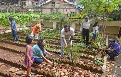 All schools should set up kitchen gardens:Centre