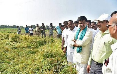 Govt. will purchase damaged crops: Minister