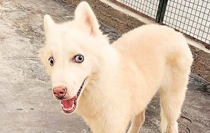 Vets from Netherlands, India give lease of life to abandoned dog