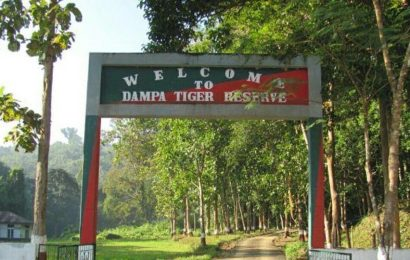 Bru will return – but to a Mizoram tiger sanctuary where there are no big cats left