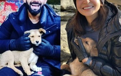Anushka Sharma, Virat Kohli make a furry friend during their hike and it is too cute to be missed – view pics | Bollywood Life