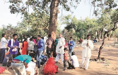 'Magic' tree in MP tiger reserve brings thousands of believers