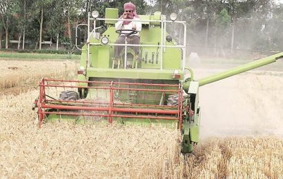 Wheat sowing down 37 per cent so far; oilseeds up