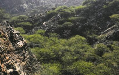Want govt to build 1,600 km green wall along Aravalli, says activist