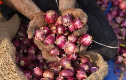 Thieves target 'pricey' onions in Madhya Pradesh farms