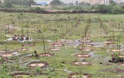 Sipcot to plant 24,000 saplings in three industrial parks by end of December