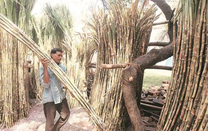 PUNJAB: In Cabinet meet, ministers allege more cane being allotted to private mills