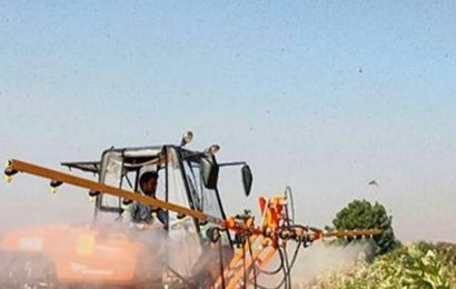 Locust menace in north Gujarat under control: State govt.