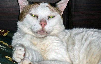 Pet pics: 'Dukkimole has lived like a queen'