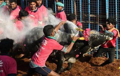 Spectator at Avaniyapuram jallikattu dies in hospital two days after injury