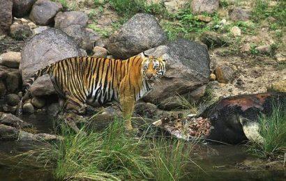 Govt. mulls wildlife safari park at Kannavam