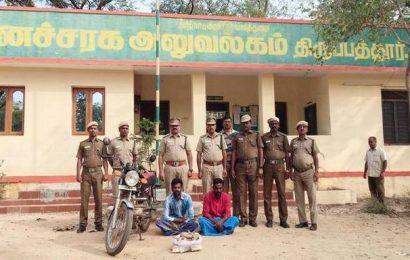 Two arrested in Tirupattur for smuggling sandalwood