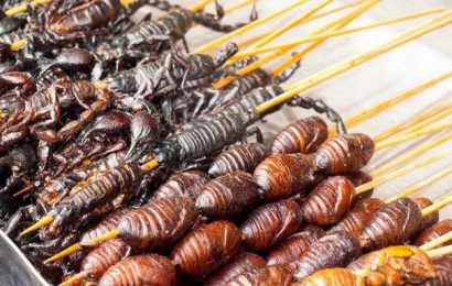 China-bound scorpions seized in Sri Lankan airport sting