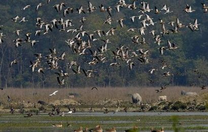 Kaziranga records 96 species of wetland birds