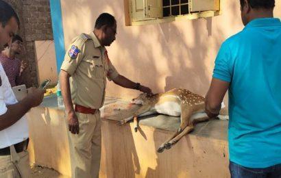 Hyderabad: Injured deer rescued from highway