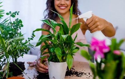 Do you wish to build a lush green indoor jungle? Here are some tips