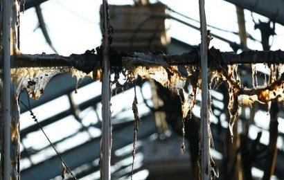 Dozens of monkeys die in German zoo fire by New Year's Eve lanterns