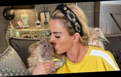 Katie Price's heartbreak as third pet has been hit and killed by a car: 'I don't know how they've escaped'