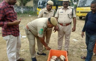 Turtle smuggling racket busted, two from West Bengal arrested