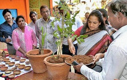 Pedajalaripeta municipal school gets terrace garden